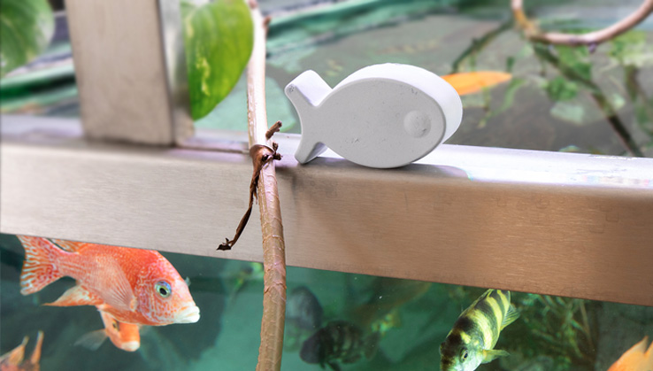 Guppy-Seife-Malawi-Aquarium