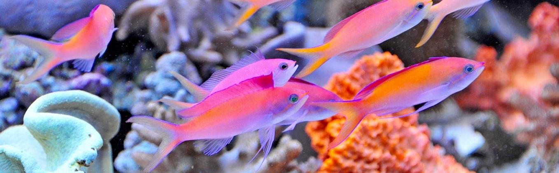 Meerwasseraquarium-fische