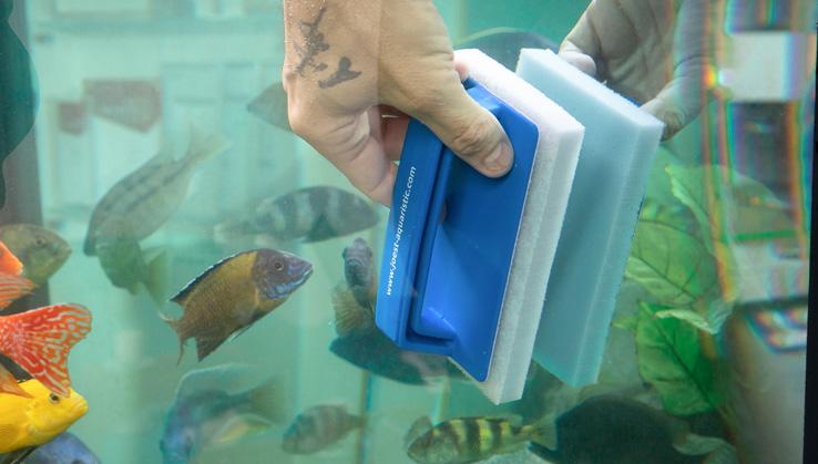 Catfish-Superclean-Pad-Buntbarsch-aquarium