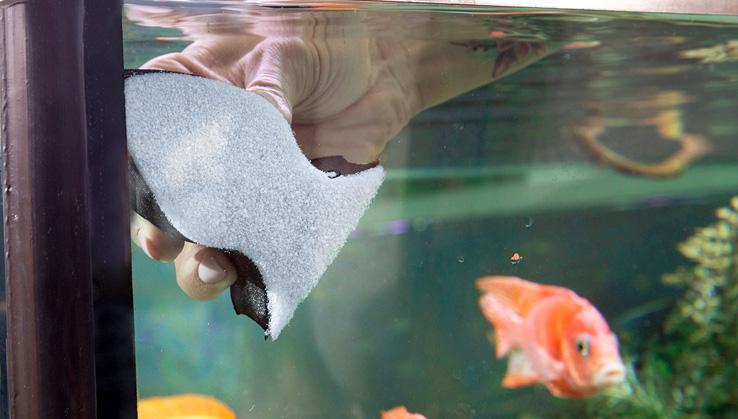 Guppy-Halter-Ocean-Pad-Buntbarsch-aquarium