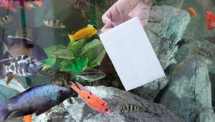 Catfish-Ocean-Pad-Buntbarsch-aquarium