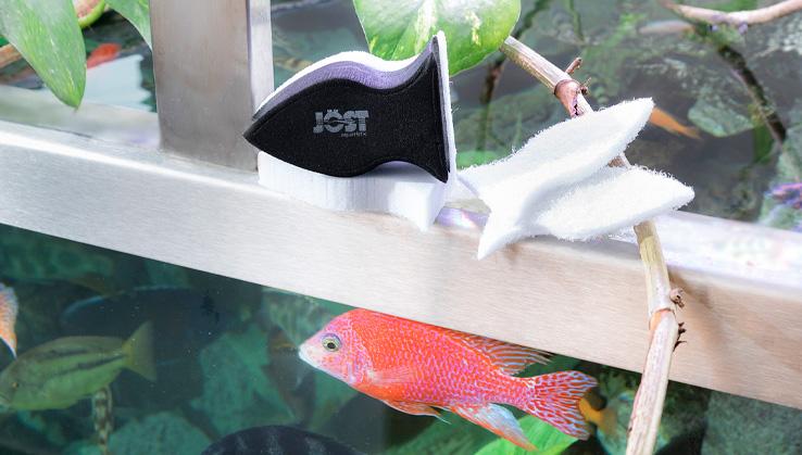 Guppy-set-malawi-aquarium